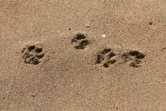 Pies łapy W piasku fotografia royalty free