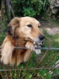 Pies zdjęcia stock