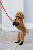 pies. Zdjęcie Royalty Free