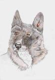 Pies royalty ilustracja