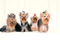 Pies Obraz Royalty Free