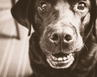 Pies Obrazy Stock