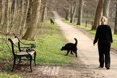 pies, Zdjęcie Royalty Free