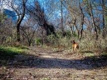 pies bada w lesie podczas zimy Zdjęcia Stock