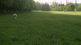 Pies biega na zielonej trawie zbiory