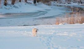 Pies biega w śniegu spadać Obraz Stock