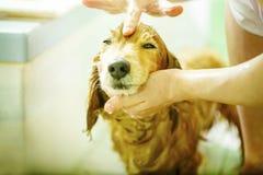 Pies bierze prysznic obrazy royalty free