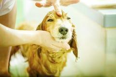 Pies bierze prysznic fotografia stock