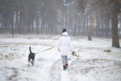 Pies chodzi na smycz dziewczynie w zimie zdjęcia royalty free