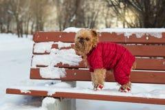 Pies chodzi w zimie Obrazy Royalty Free