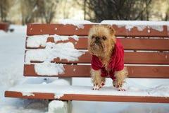 Pies chodzi w zimie Obrazy Stock