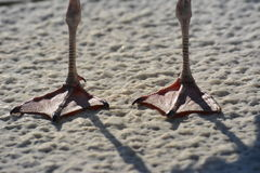 Pies de la gaviota en el hormigón texturizado Imágenes de archivo libres de regalías