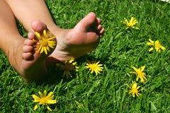 Pies de la hierba Imagen de archivo libre de regalías