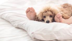 Pies de la mujer en la cama con el perro de caniche Fotografía de archivo