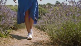 Pies de la mujer que caminan lentamente en campo de la lavanda metrajes