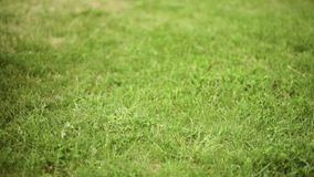 Pies de los niños en hierba verde almacen de video