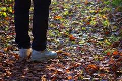 Pies de zapatillas de deporte que caminan en las hojas de la caída Fotografía de archivo