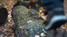 Pies del adolescente paso a paso que caminan en caminar en bosque caido del otoño de la clave del árbol - cierre encima de la cám metrajes