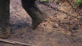 Pies del elefante almacen de metraje de vídeo