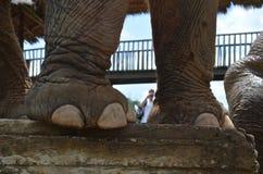 Pies del elefante Fotos de archivo libres de regalías