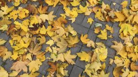 Pies del hombre en la calle cubierta con las hojas en Autumn Park Ciérrese encima de tiro almacen de video