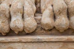 Pies del león Imágenes de archivo libres de regalías