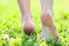 Pies desnudos en la hierba suave del verano Fotos de archivo