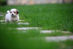 pies dziecka Obrazy Stock