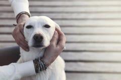Pies enraptured w uścisku jego właściciel Zdjęcia Stock