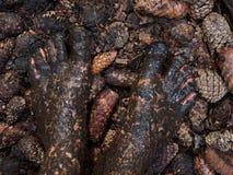 Pies fangosos Imagenes de archivo