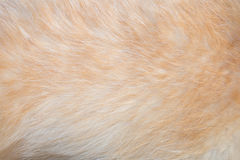 Pies futerkowa tekstura Zdjęcie Stock
