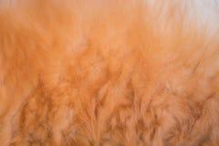 Pies futerkowa tekstura Obraz Royalty Free