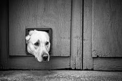 Pies głowa przez kota łopotu - czerń & biel fotografia royalty free