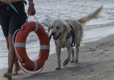 Pies iść zdala od plaży Obraz Royalty Free
