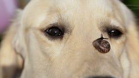 Pies i ślimaczek zbiory