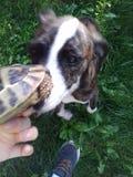 Pies i żółw fotografia stock
