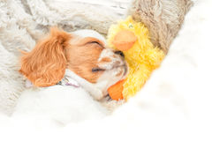 Pies i Kaczka fotografia stock