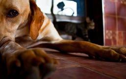 Pies i kot obraz royalty free