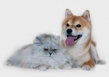 Pies i kot Zdjęcia Royalty Free