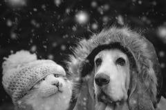 Pies i kot kapelusz w opadzie śniegu Fotografia Stock