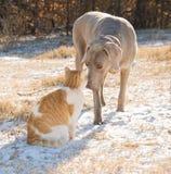 Pies i kot nos ostrożnie wprowadzać w śnieżnym polu Fotografia Royalty Free