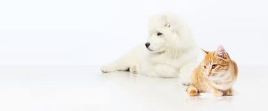 Pies i kot odizolowywający na białym tle Obrazy Stock
