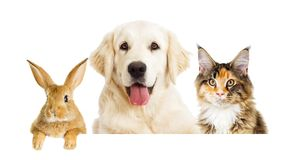 Pies i kot patrzeć obrazy royalty free