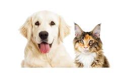 Pies i kot patrzeć zdjęcia stock