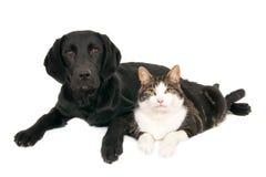 Pies i kot pozuje wpólnie zdjęcie stock