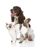 Pies i kot. przyglądający oddalony Fotografia Royalty Free