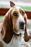 Pies i motyl Fotografia Stock