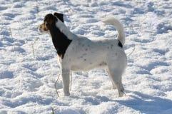 Pies i śnieg Zdjęcia Stock