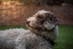 Pies i osa obrazy royalty free