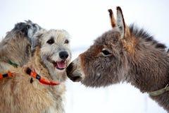 Pies i osioł obraz royalty free